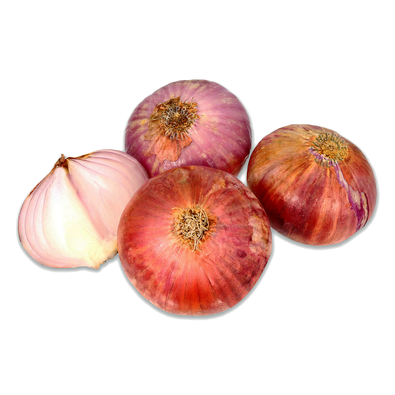 Chef Red Onion - Large