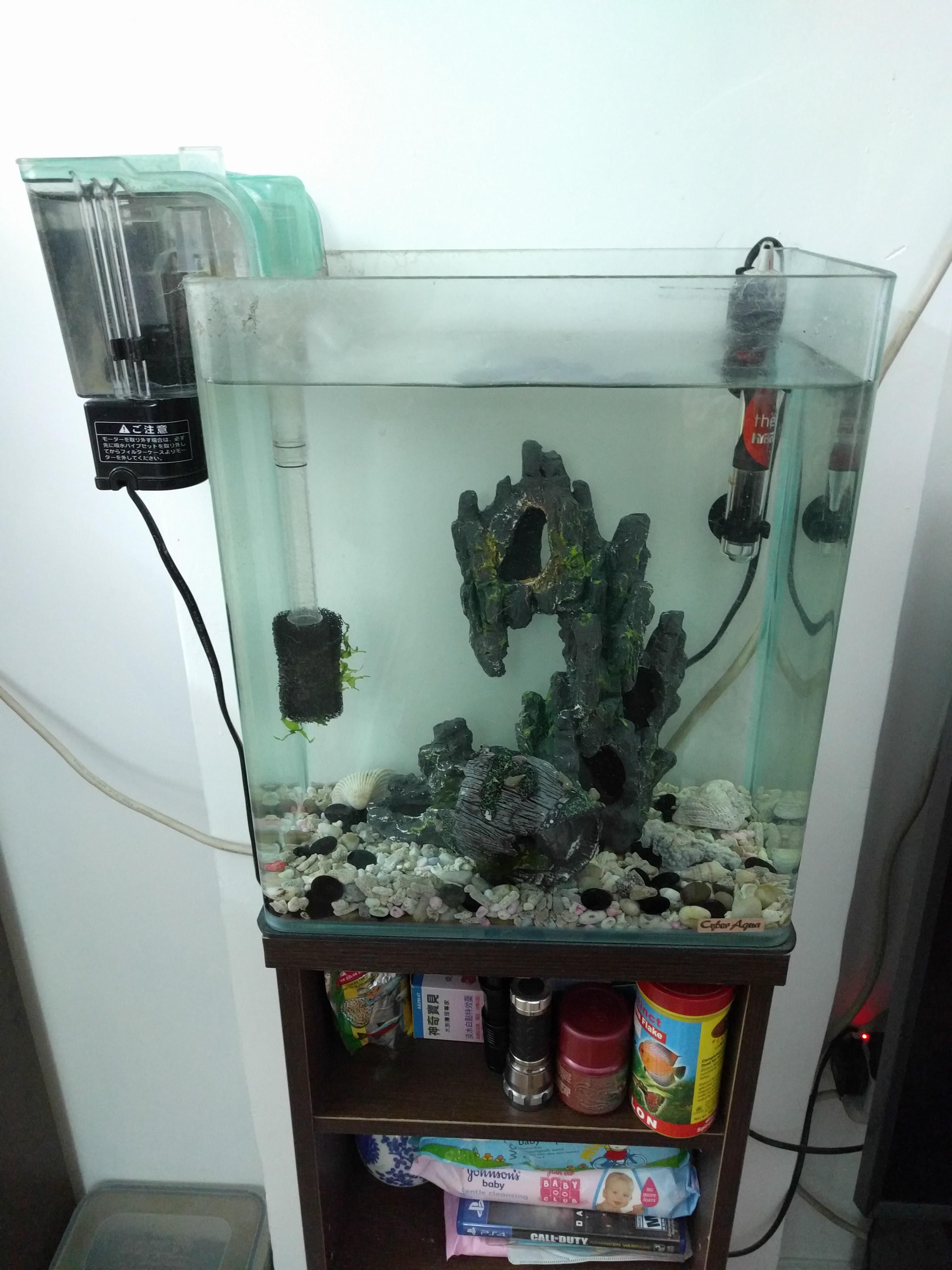 Fish aquarium heater - Pick Up In North Point Anytime M F Before 1pm Or Anytime Before 6pm On Sunday Glass Fish Tank With Heater