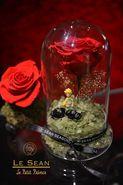 Little Prince Limited Version Rose Flower (Le Sean)