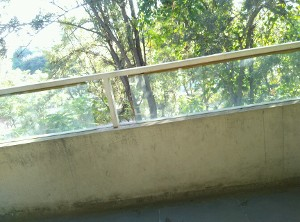 3 BHK Flat for Rent in Le Terrace, Hoodi | Picture - 9