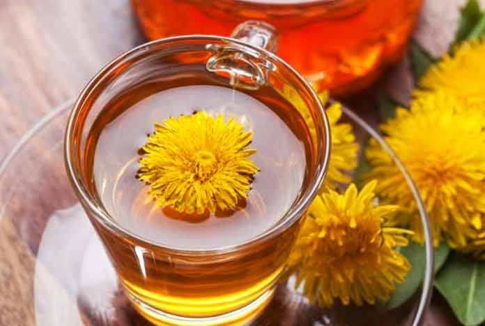 Dandelion for 10 Best Herbs That Help in Weight Loss