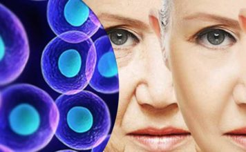 3. Stem Cells – How Do They Work as an Active Antiaging Agent